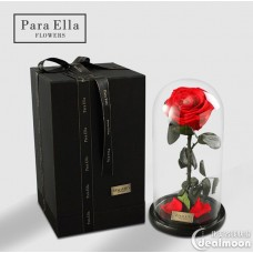 Beauty and Beast Inspire Preserved Single Red Rose